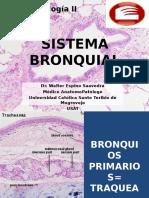 Histologia de Aparato Respiratorio - SISTEMA BRONQUIAL