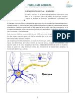 Comunicacion Neuronal Sinapsis