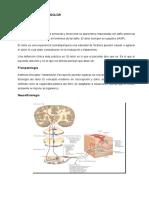 Exposicion de Farmacologia -Analgesicos y Antiflamatorios- Word