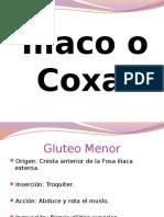 Iliaco o Coxal