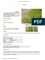 Batis maritima - Useful Tropical Plants.pdf