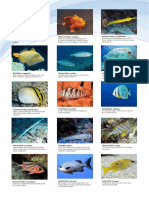 common-reef-fish-families.pdf
