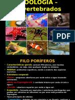 zoologiainvertebrados