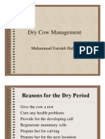 Dry Cow Management