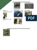 animales en peligro extincion.docx