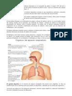 El Aparato Respiratorio Digestivo y Circolatorio