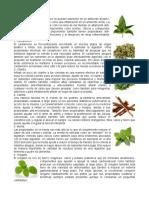 20 plantas medicinales