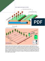 etailed Irrigation Design.docx
