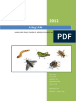 Insect Rearing in Relation to Animal Welfare