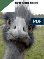 !!!! Emu
