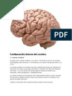 Configuración interna del cerebro.docx