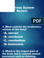 Nervous System 5 Point Review