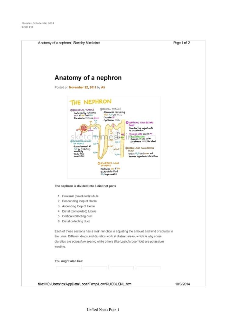 Anatomy of Nephron