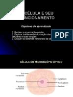 Biologia PPT - Célula e seu Funcionamento