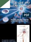 Biologia PPT - Células Tronco 1