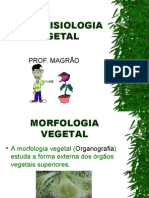 Biologia PPT - Anatofisiologia Vegetal
