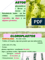 Biologia PPT - Botânica - Fotossíntese - Cloroplastos