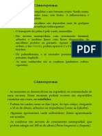 Biologia PPT - Botânica - Gimnospermas 01