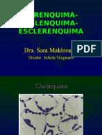 Biologia PPT - Botânica - Spanish - Espanhol - Parênquima Colênquima Esclerênquima