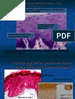 Biologia PPT - Botânica - Tecido Epitelial - Parte 02