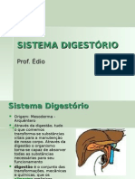 Biologia PPT - Sistema Digestorio