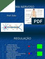 Biologia PPT - Sistema Nervoso