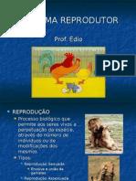 Biologia PPT - Sistema Reprodutor