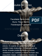 3º Aula - Músculos do Dorso.ppt