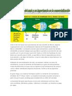 Ante El Reto de Reducir Las Importcaciones de Maíz Amarillo en México