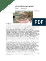 crustaceos.docx