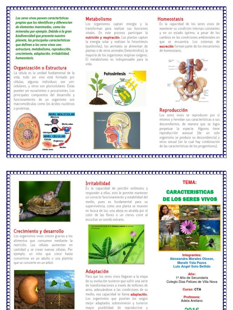 Leer sobre definición de metabolismo