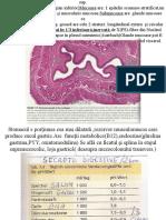 stomac2025 (3)
