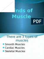 Kinds of Muscle.pptx