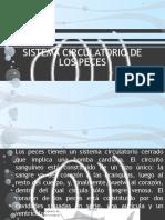 SISTEMA CIRCULATORIO DE LOS PECES.pptx