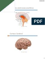2° Modulo Sistema nervioso y comportamiento clase 3.pdf