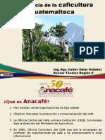 Caficultura GuatemaltecaRII