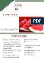 AULA - MELANCIA.pdf