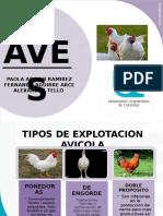 Exposicion Aves