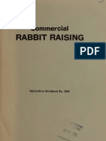 Commercial Rabbit Raising Rich