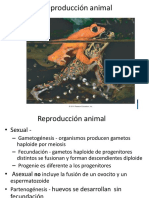 Reproduccion Animal