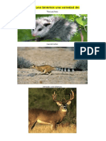En la fauna tenemos una variedad de.docx