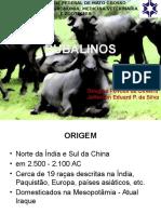 BUFALOS(1)