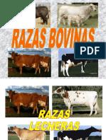 RAZAS BOVINAS.ppt