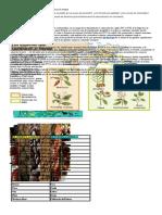 Agricultura 3º El Intercambio de Alimentos Entre Amèrica y Europa