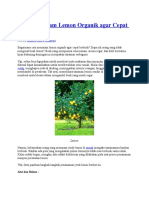Cara Menanam Lemon Organik Agar Cepat Berbuah