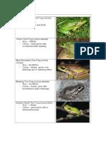 frog index