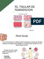 Nivel-tisular.pdf