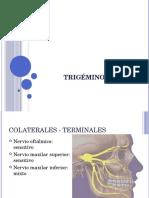 Trigémino V