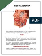 Anatomía región maseterina