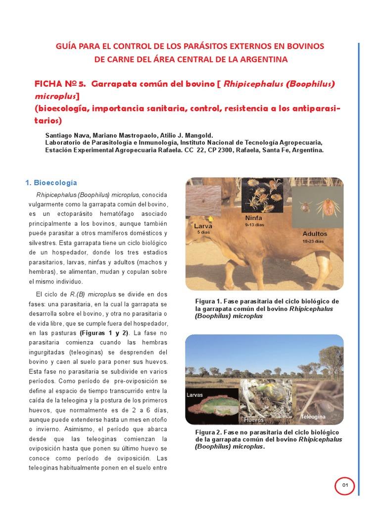 control de parásitos externos en bovinos